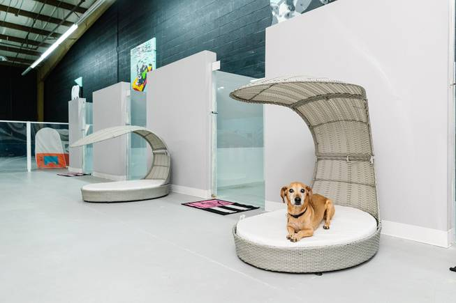 midi suite pawsh palace dog boarding daycare