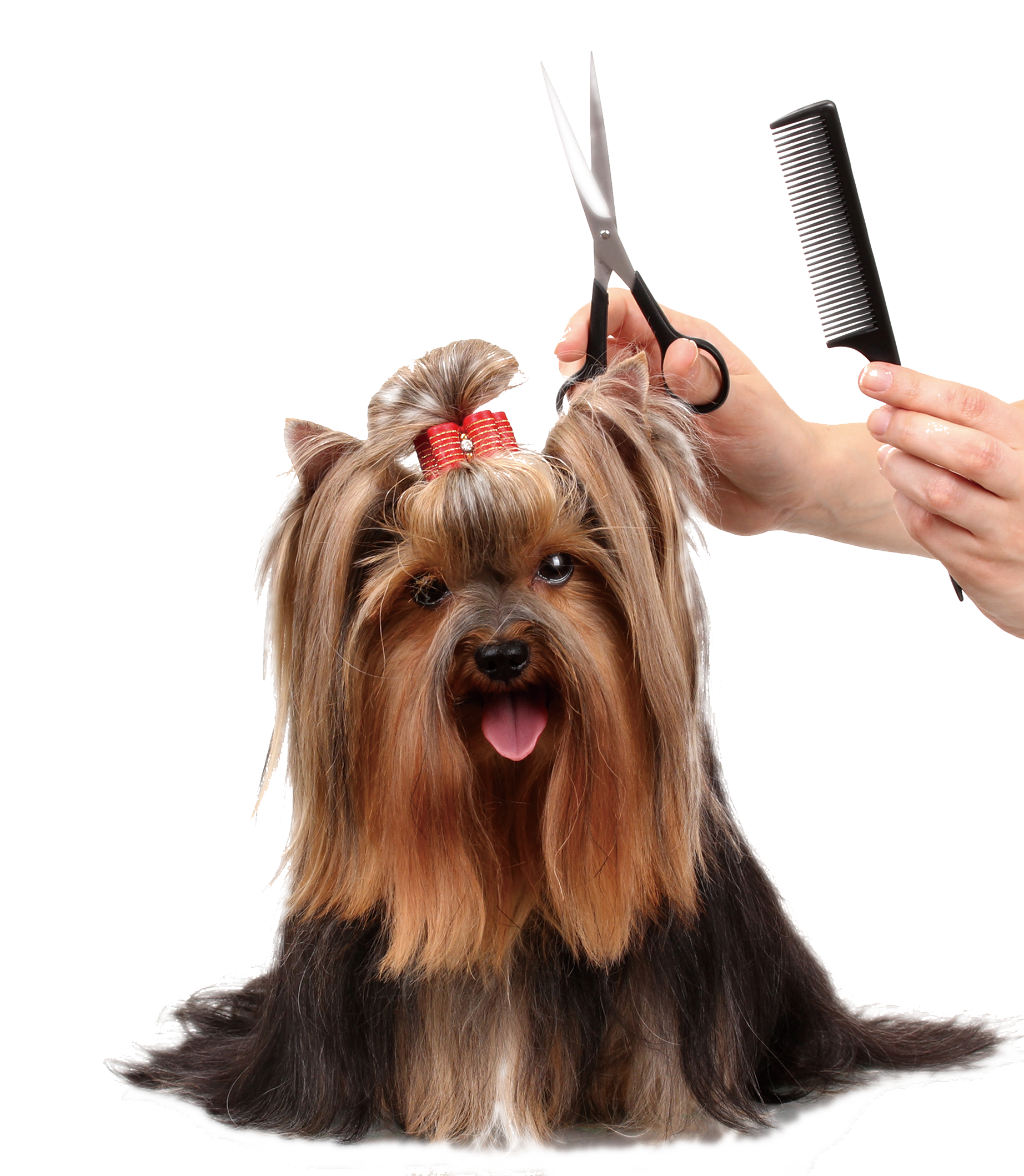pretty dog getting haircut scissors at pawsh palace las. vegas